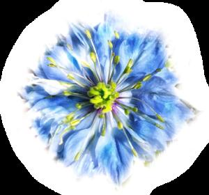 blue_flower_slide