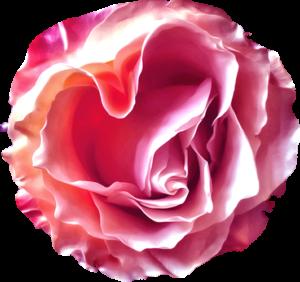 heart_rose_slider
