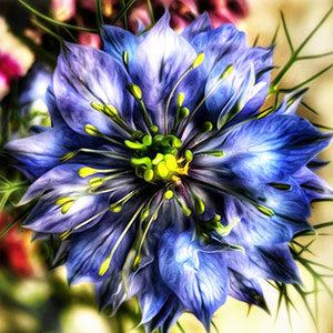 female_gynecologist_atlanta_flower